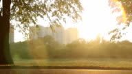 Energetic young man jogging in city park, sportsman living active video