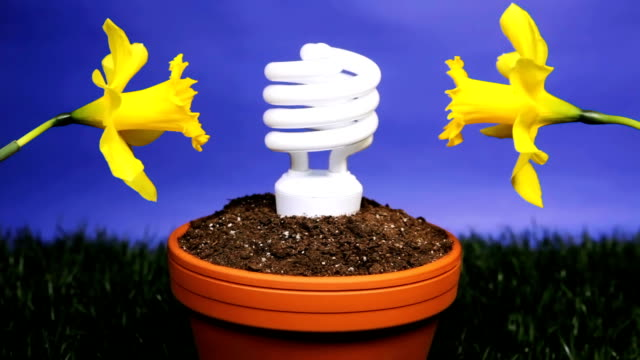 Energy saving light bulb planted video