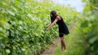 Enjpying the Vineyard video