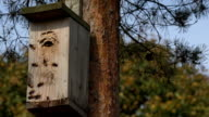 entrance hornets nest of wasps in bird nesting box video