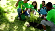 Environmental activists watering a new tree in the park video
