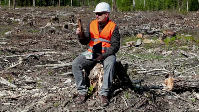 Environmental inspector check piece of wood in the destroyed forest video
