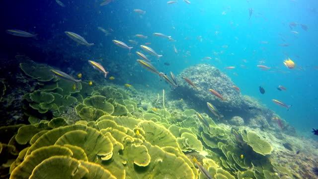 Epic Nature Underwater: Maze Coral (Montipora). video
