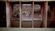 Equipment for the processing of sunflower seeds video