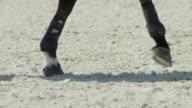 Equitation - gallop video