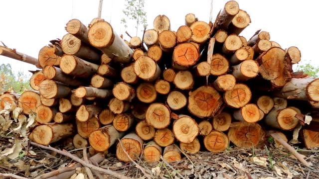 Eucalyptus log video