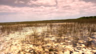 Everglades Airboat Ride on a hot and sunny day video