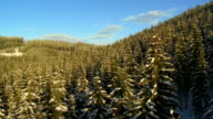 Evergreen Trees At Sunset video