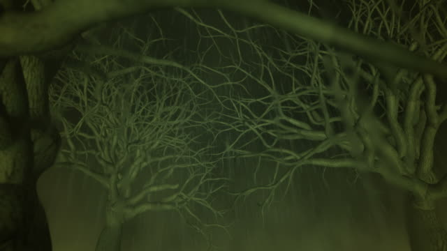 Evil Forest (1080/30P) video