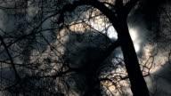 Evil tree video