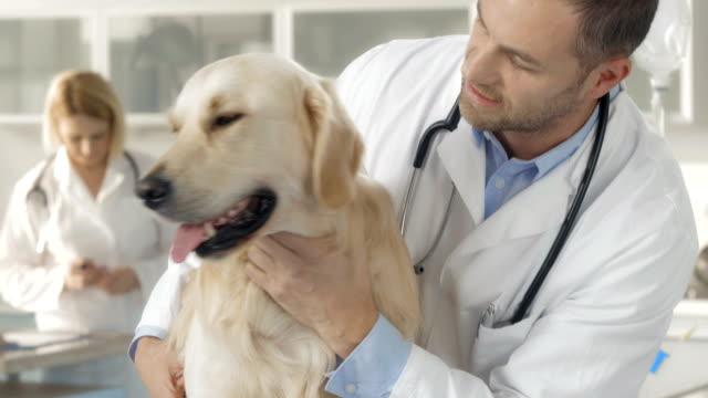 Examining A Dog At The Animal Hospital video