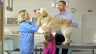 Examining A Dog At The Animal Hospital video