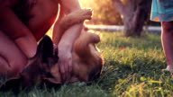 Excite puppy dog rolling on grass video