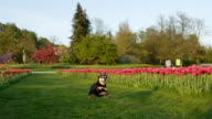 SLOW MOTION: Excited senior dog running on grass field near colorful flowerbeds video