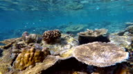 Exotic coral reef on Maldives - South Ari Atoll video
