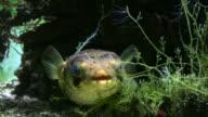 HD: exotic fish video