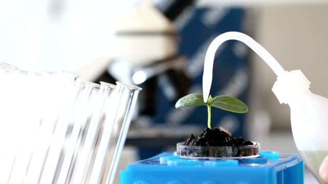 Experimenting With Flora In Laboratory.seedling in Laboratory. video