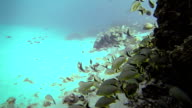 Exploration Underwater in San Andres Colombia video