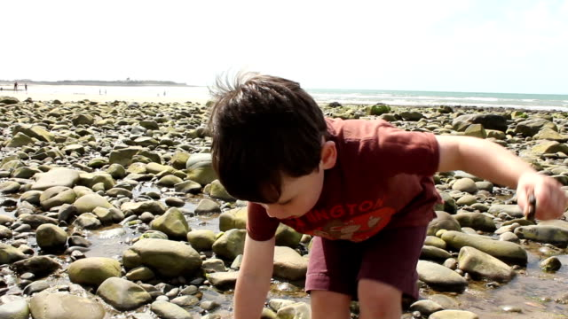 Exploring The Tide pools video