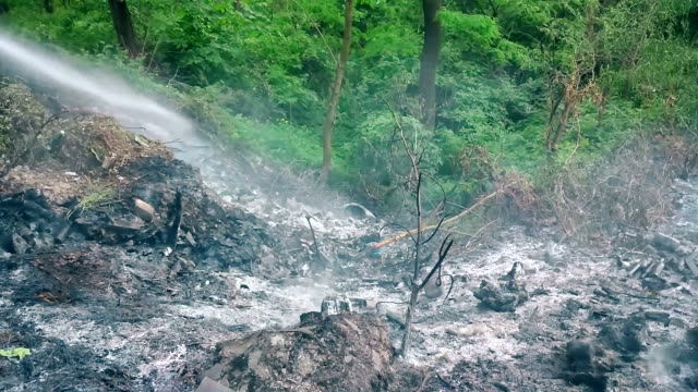 Extinguishing a fire in a forest video