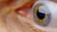 Extreme close up human eye iris video