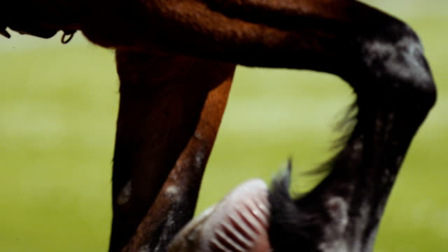 Extreme closeup Harness racing (slow motion) video