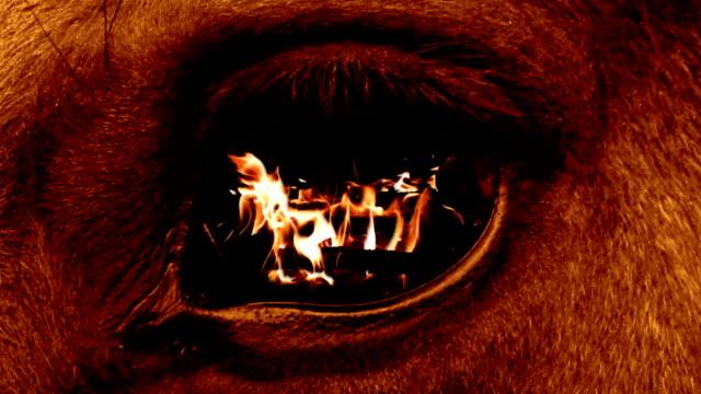 Eye beast video