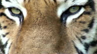 eye of the tiger video
