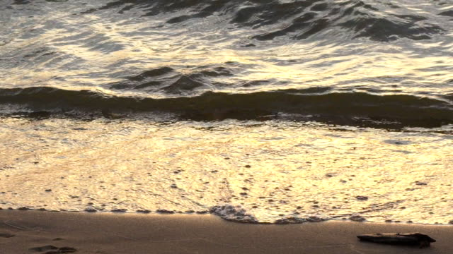 Fabulously shaped wave breaking on a beach at sunrise video