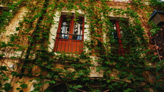 Facade of a medieval house in Rome. Covered with ivy video