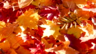 Fade Colors of Autumn video