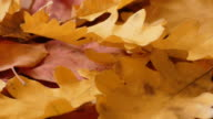 Faded red and yellow autumn leaves video