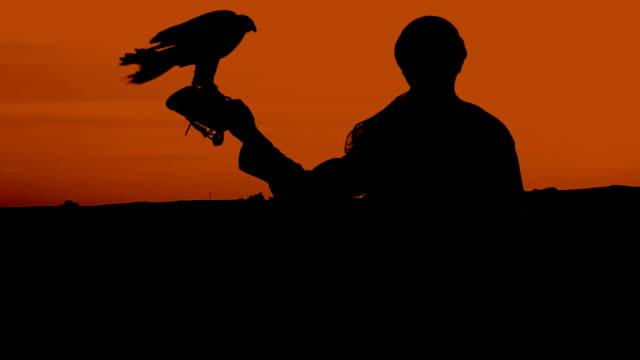 Falconer silhouette against sunset video