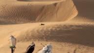 Falcons in desert, Dubai video