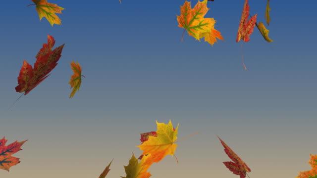 Fall, Autumn Leafs falling. video