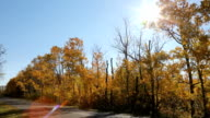 Fall Colors Sunshine video