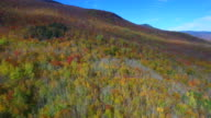Fall foliage aerial drone video video