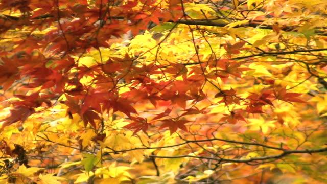Fall Foliage video