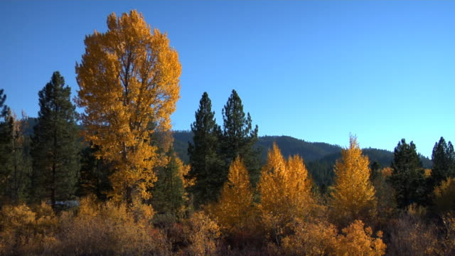 Fall landscape video
