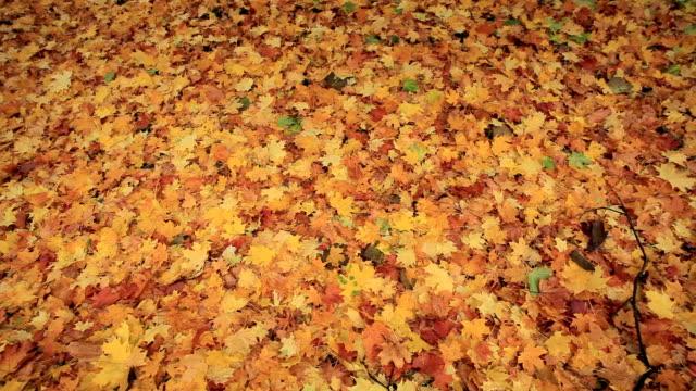 fall lush foliage video