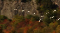 Fall Migration.. video