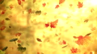 Fall/Autumn leaves (forest background) - Loop video