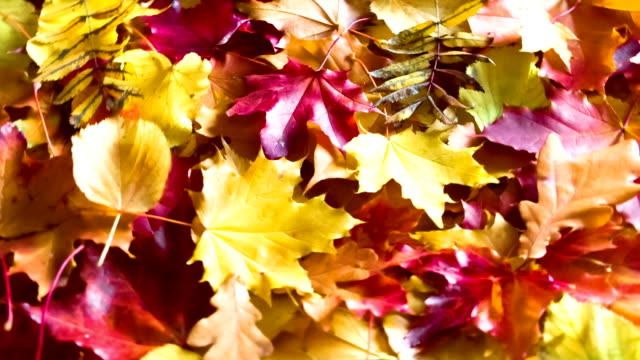 Fallen Autumn Leaves video