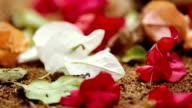 Fallen leaves and flowers video