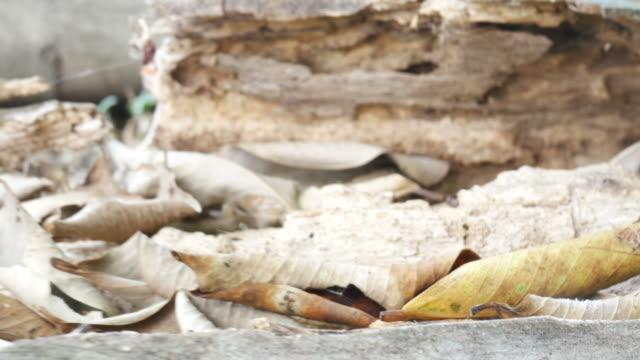 Fallen leaves video