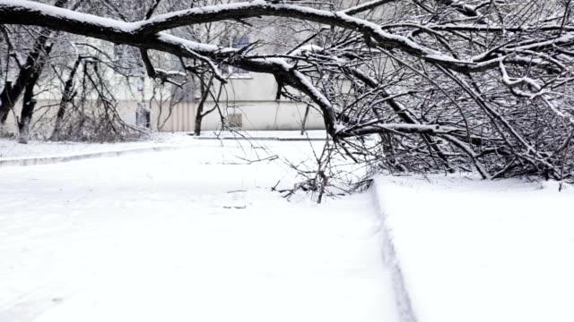 Fallen tree in winter street video