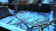 Fallen Tree Winter Ice Storm Damage Yard Timelapse video