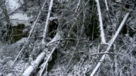 Fallen Trees In The Forest video
