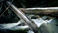 Fallen Trees Over River With Snow On Them video