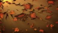 Falling autumn leafs video